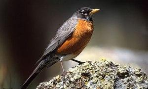 Robin's Trivialities
